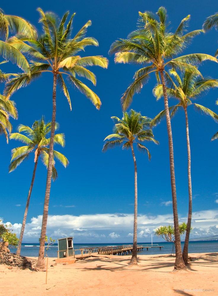 Photoshopped Palm Trees?
