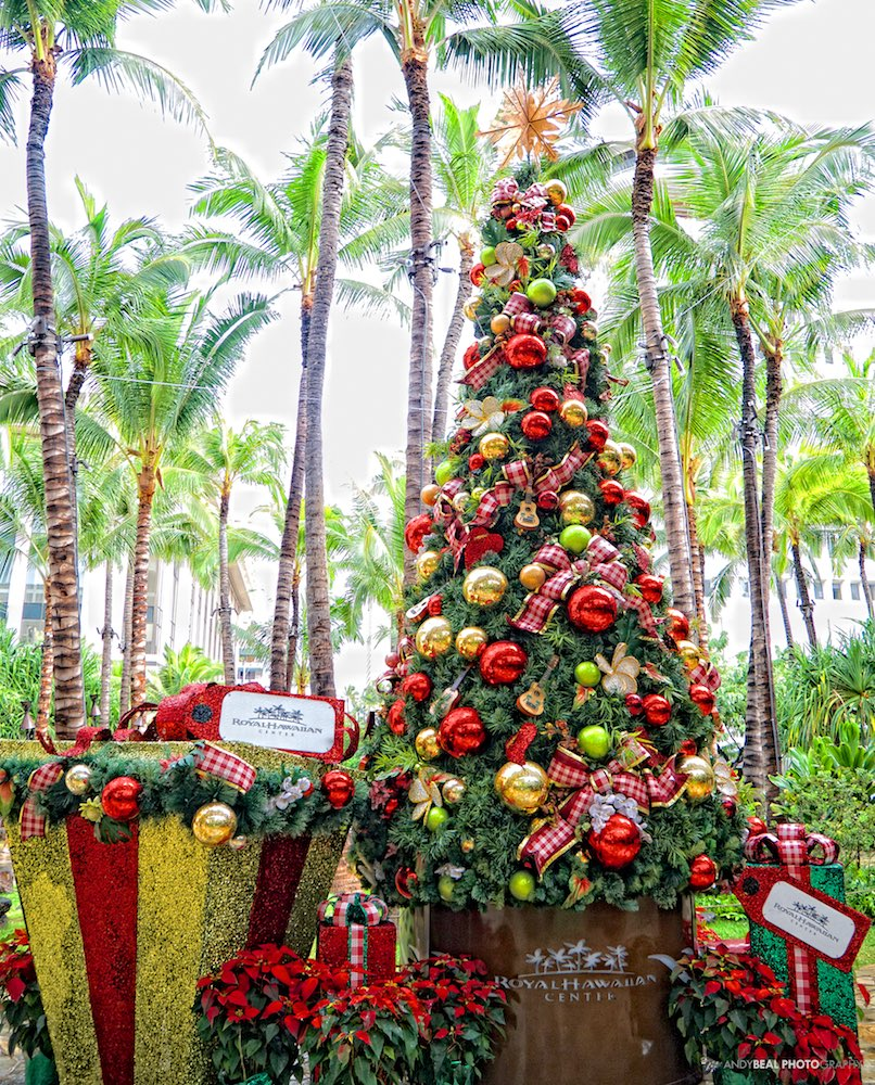 Christmas Palm Trees Hawaii Landscape Photography