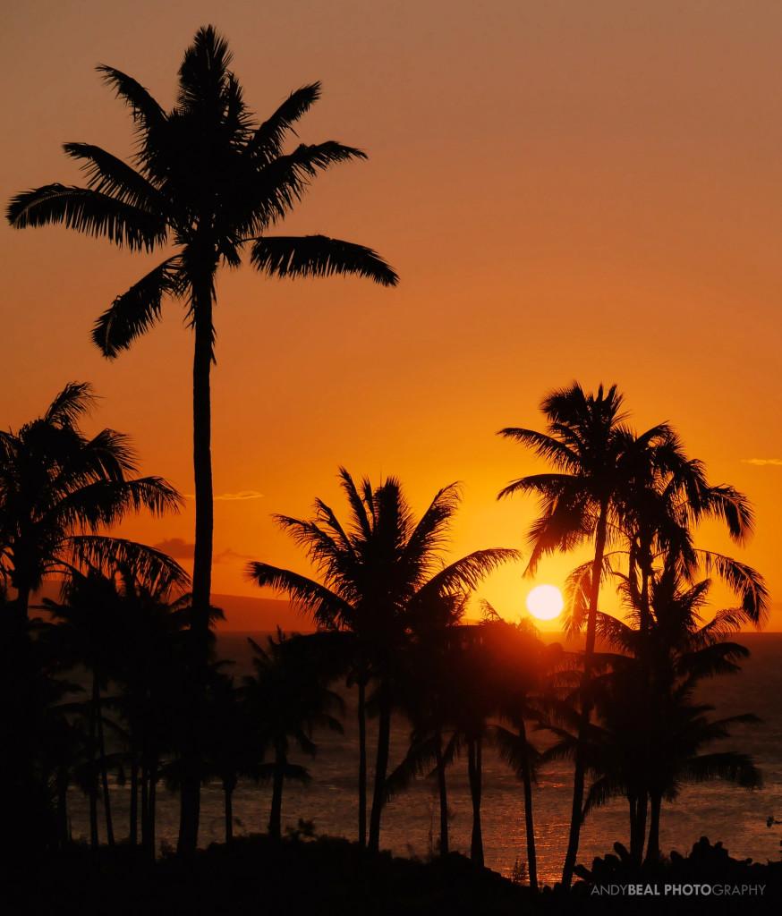 Even Palm Trees Stop & Watch a Hawaiian Sunset!